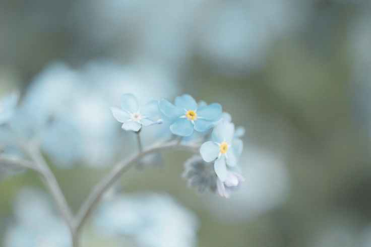 blue petaled flowers